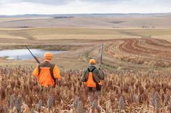 sam stukel,pheasant hunting-15