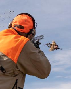 Wingshooting action in South Dakota