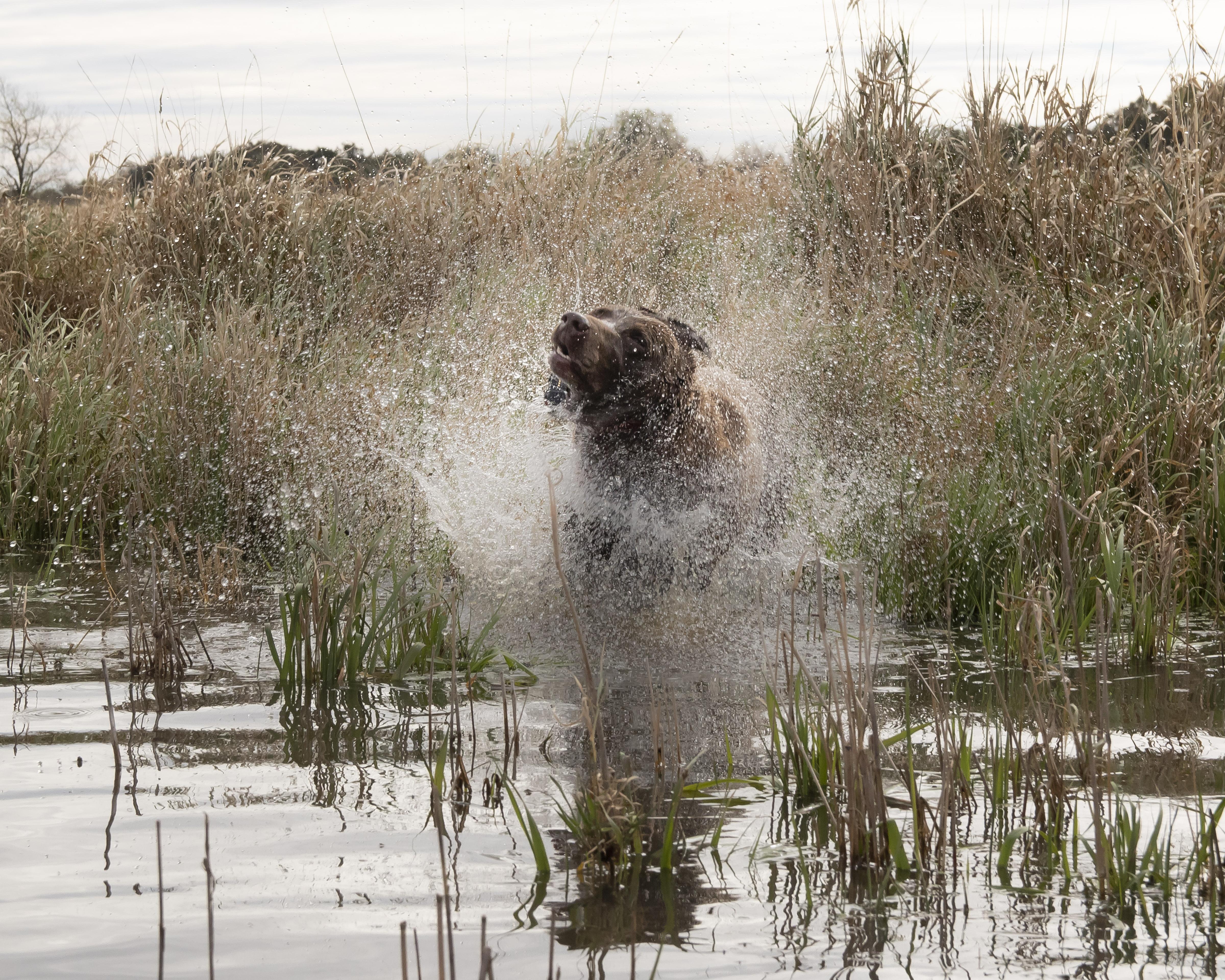 sam stukel,pheasant hunting-24