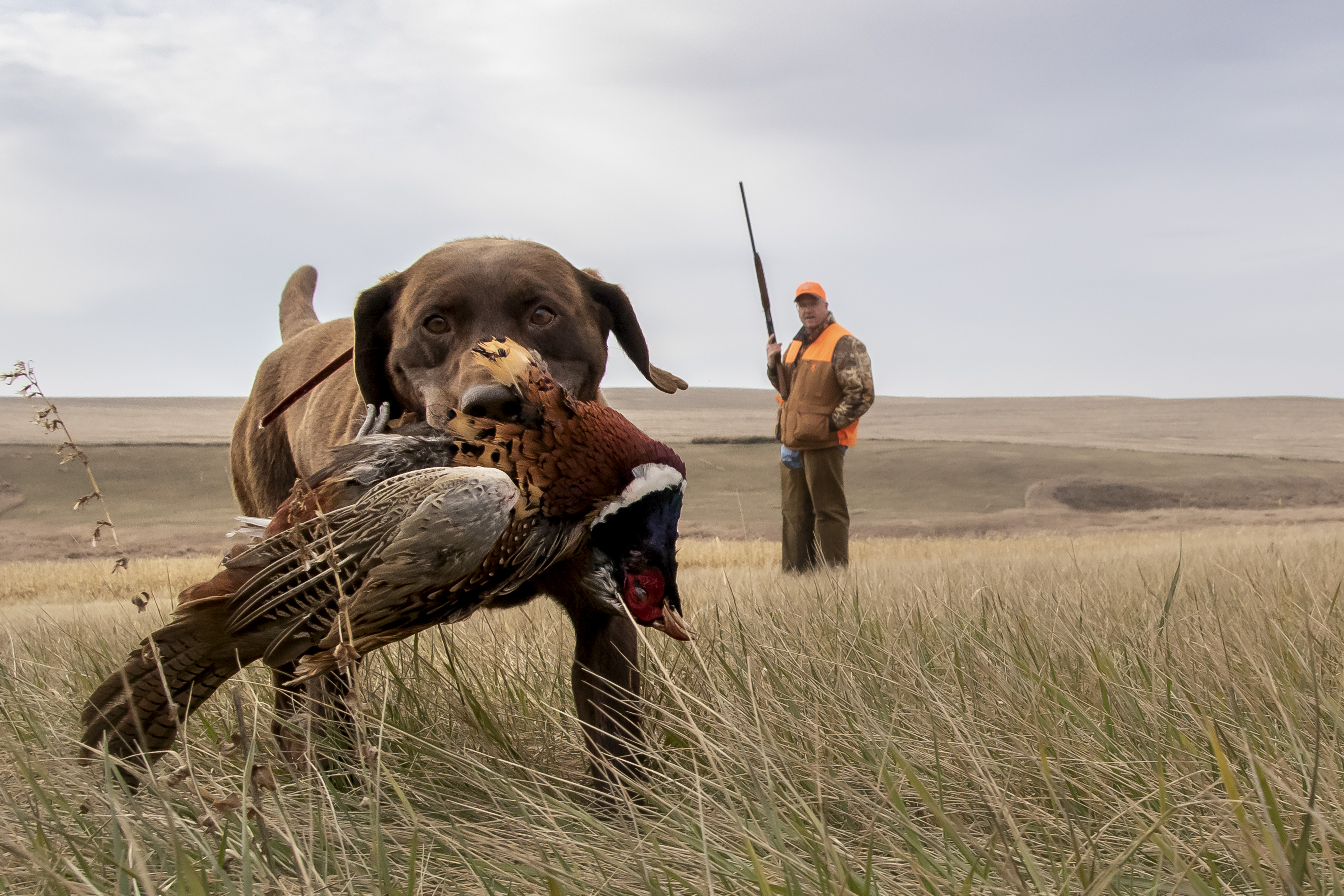 sam stukel,pheasant hunting-7
