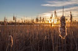 Pheasant habitat in South Dakota