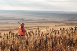 sam stukel,pheasant hunting-4