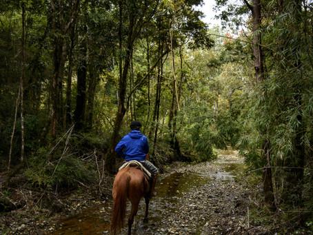 Cabalgata en Las Tranqueras: ¡Esto es sur!