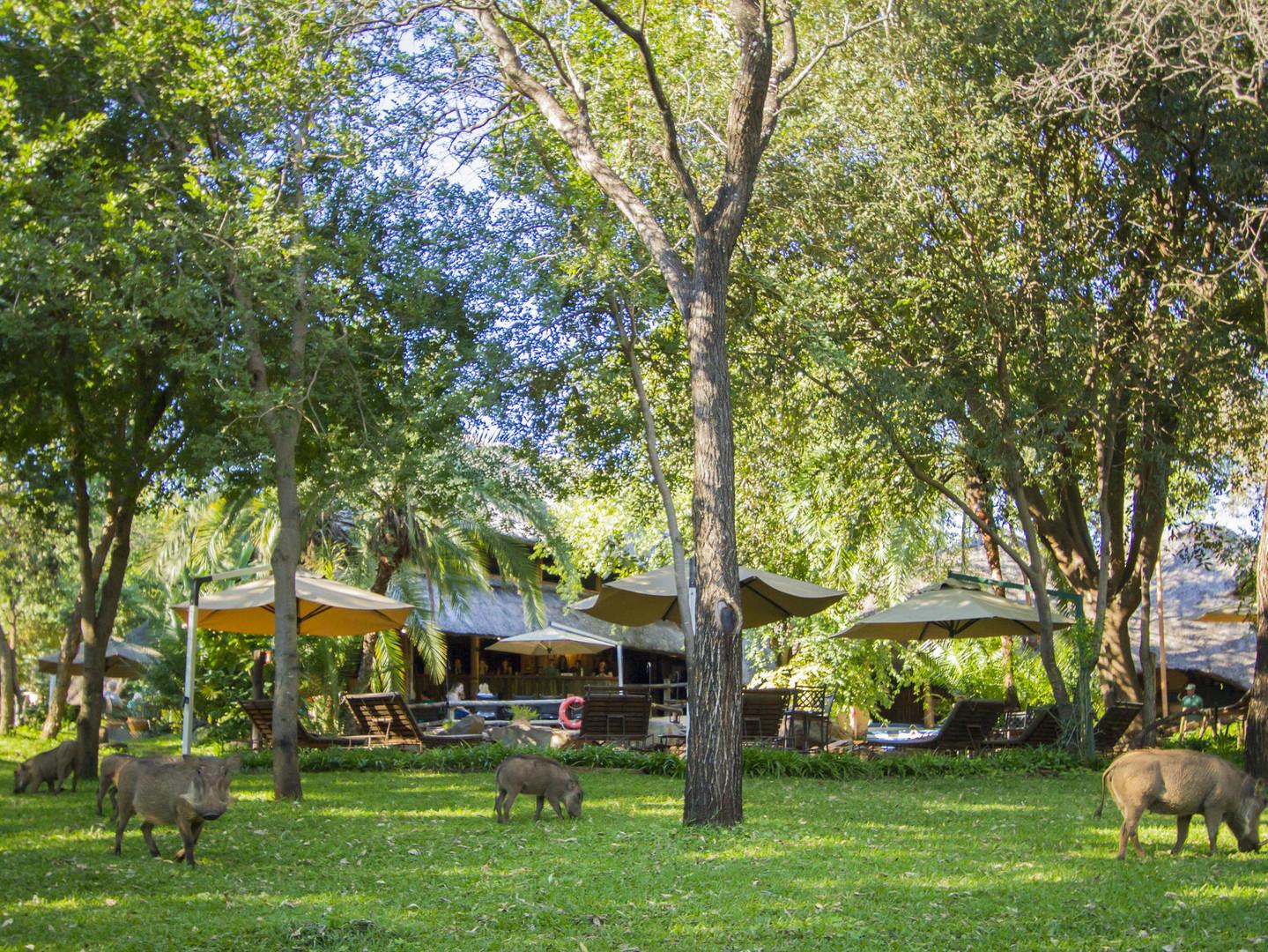 Lokuthula Lodge gardens.jpg