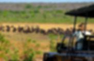 Vehicle and buffalo.jpg
