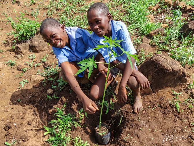 Masuwe Primary students plant trees as part of Bushtracks Footprint initiative