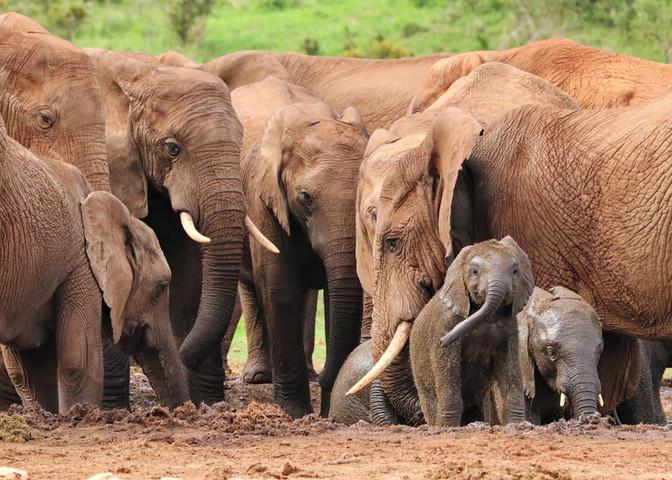 Hwange National Park boasts an abundance of wildlife