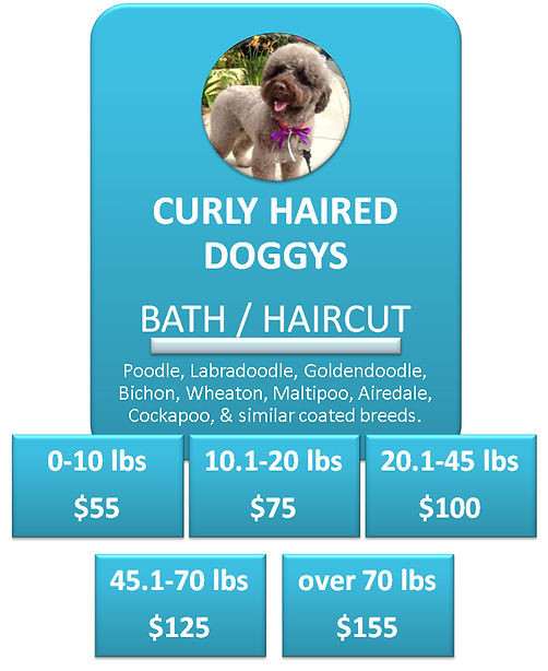 Doodle Dog Grooming Cottonwood Heights S