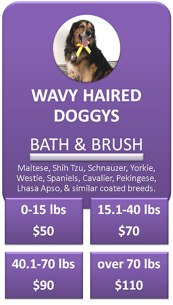 Wavy Haired Dog Bath and Brush Cottonwoo