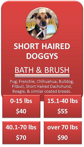 Short Haired Dog Grooming Cottonwood Hei