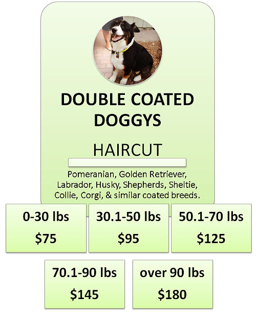 Australian Shepherd Dog Grooming Cottonw