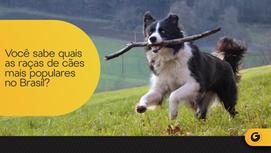 Você sabe quais as raças de cães mais populares no Brasil?