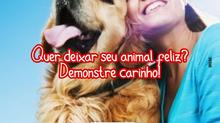 Quer deixar seu animal feliz? Demonstre carinho!