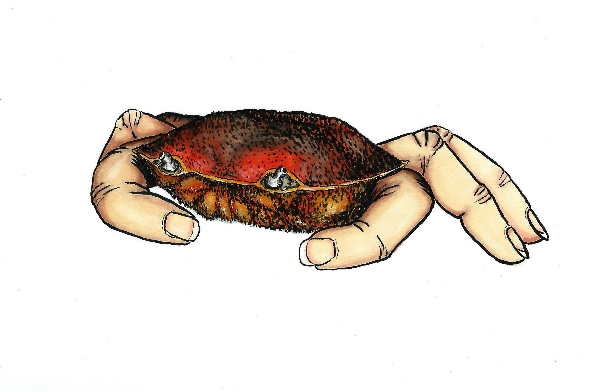 Le crabe aux pinces doigts