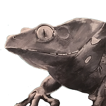 Frog-painting-Sq-White.png