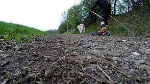 Cani Cross-Skating