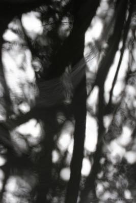 Draps dans les arbres