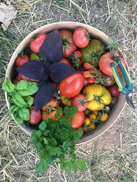 les délicieuses tomates