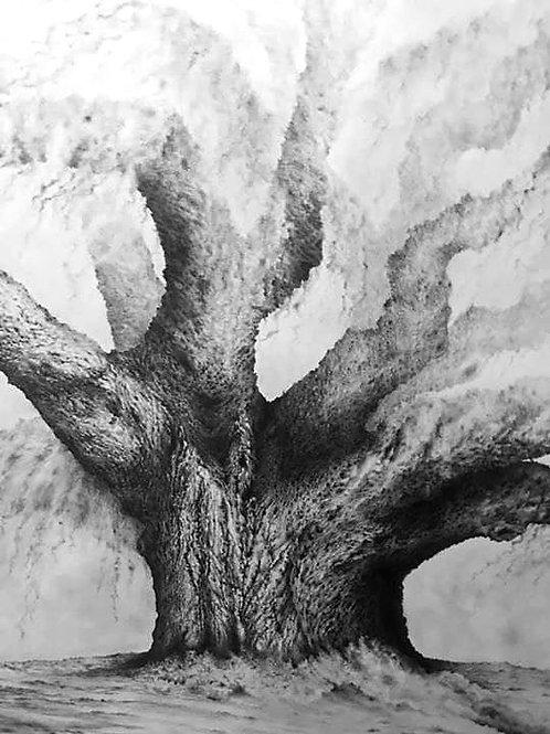 LIVE OAK TREE (print)