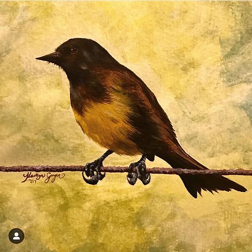 YELLOW RUMPED MARSH BIRD (print)