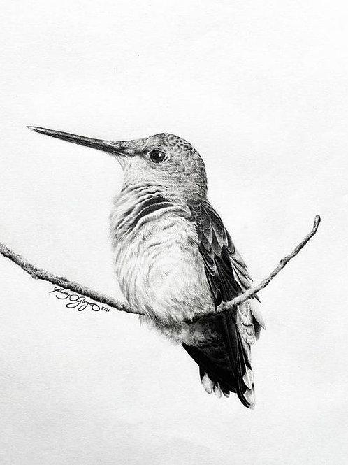 HUMMINGBIRD (print)