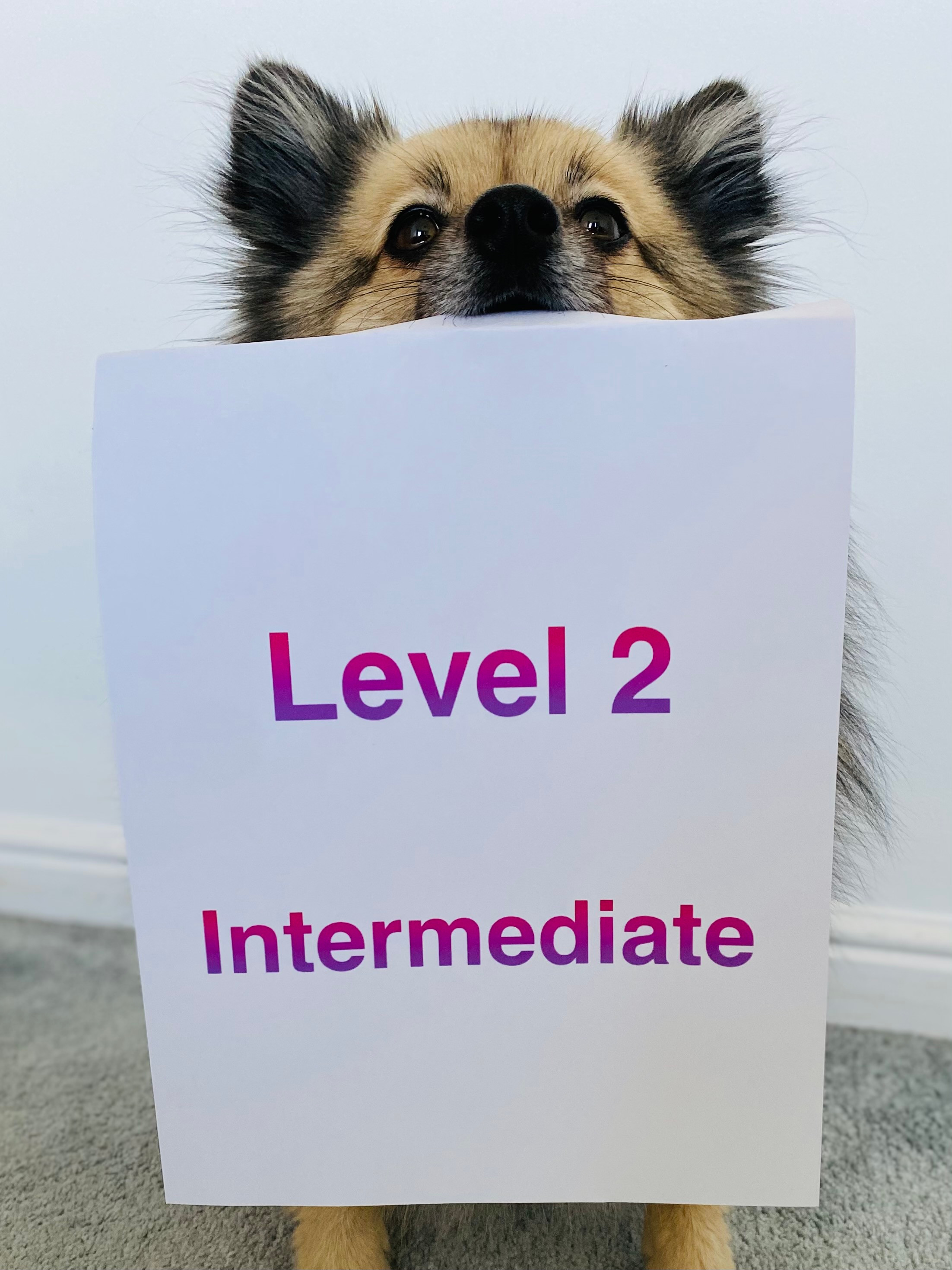 Level 2 Intermediate @ Horndean