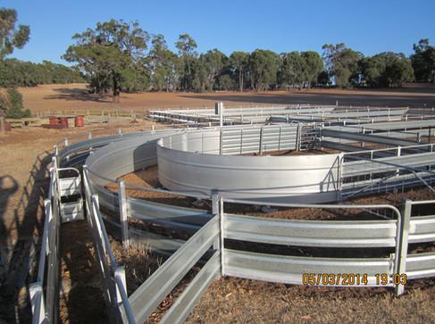 sheep yards pic 1 web.JPG