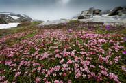 PGAZ3981 fiori.jpg