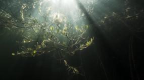 Down mangrove-Mexico.mov