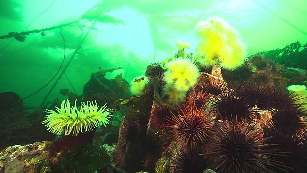 Underwater00903572.mov