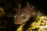 Baby salamander