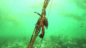 Kelp crab-Canada.mov