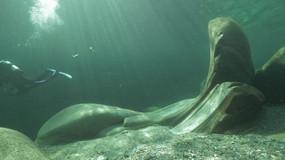 Stone underwater