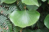 feuille bretagne naturopathie, alimentation vivante, santé au naturel, légumes anciens, bien-être, vitalité, ardèche drome valence guilherand-granges soyons valérie velter