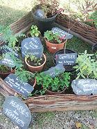 naturopathie, alimentation vivante, santé au naturel, légumes anciens, bien-être, vitalité, ardèche drome valence guilherand-granges soyons valérie velter plantes médicinales