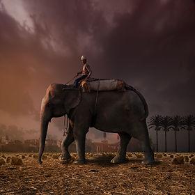 Riding the elephant.jpg