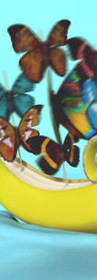 Banana Blue Background Butterfly.mov