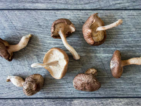 Know more about Shiitake Mushrooms!