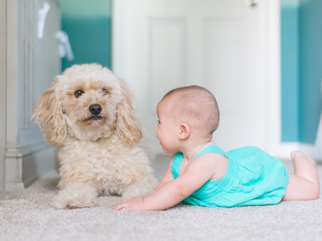 How Getting a Puppy Prepares You For Parenthood