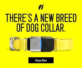 fi-smart-collar-img.jpg