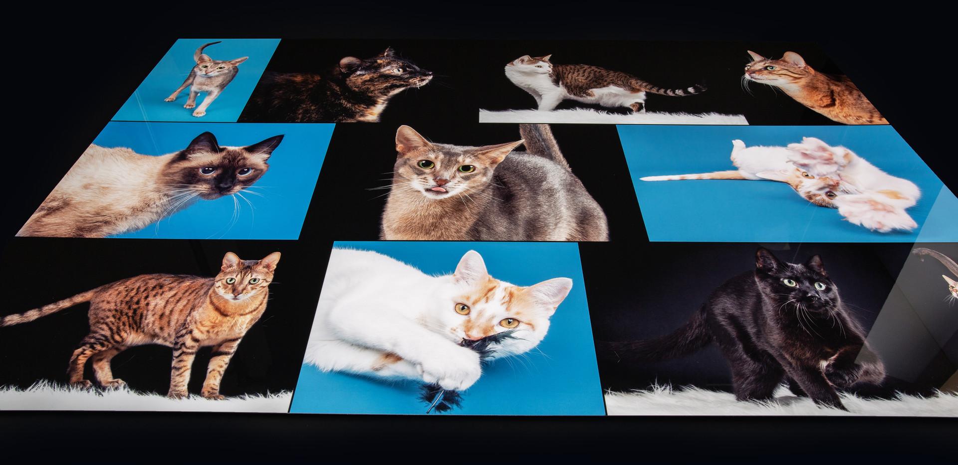 Cat Collage #2.jpg
