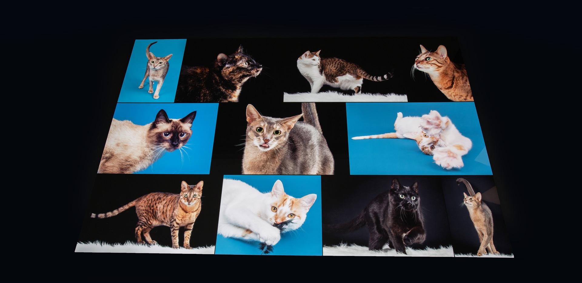 Cat Collage #1.jpg