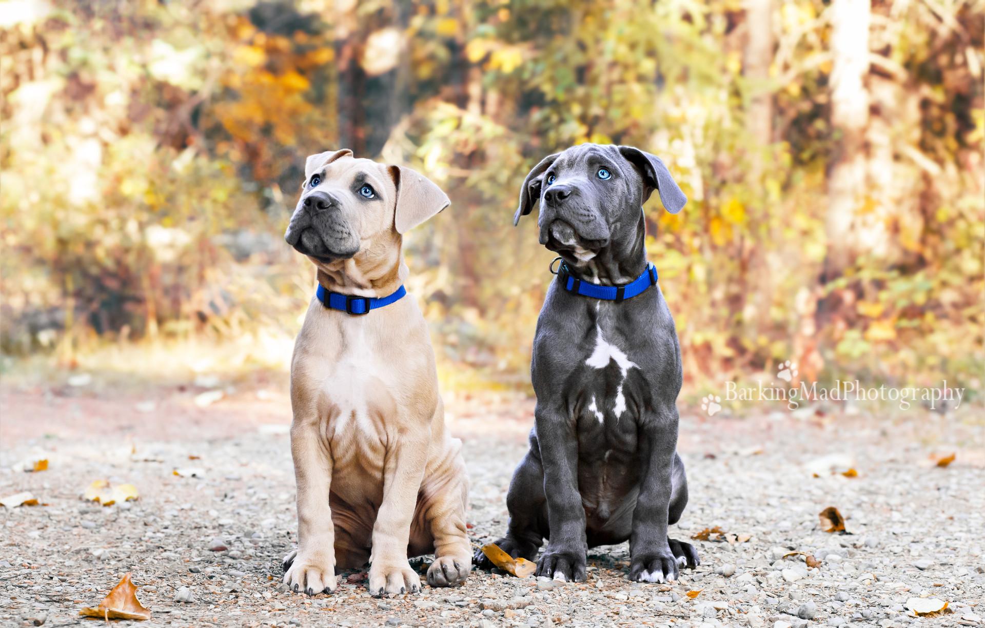 Brutus and Briggs