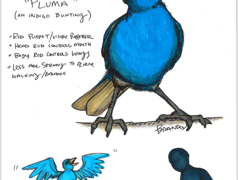 Pluma Design