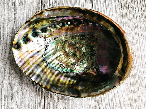 Abalone Shell, smudge, soap dish