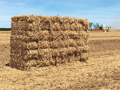 Hay & straw baled in Canterbury