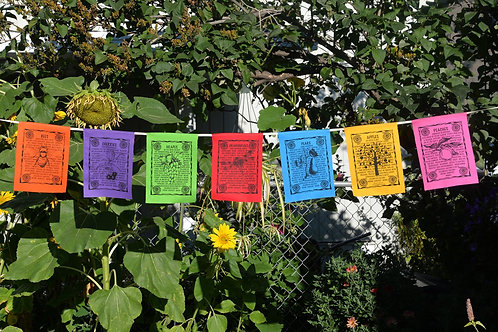 Fruit – 7 Flags