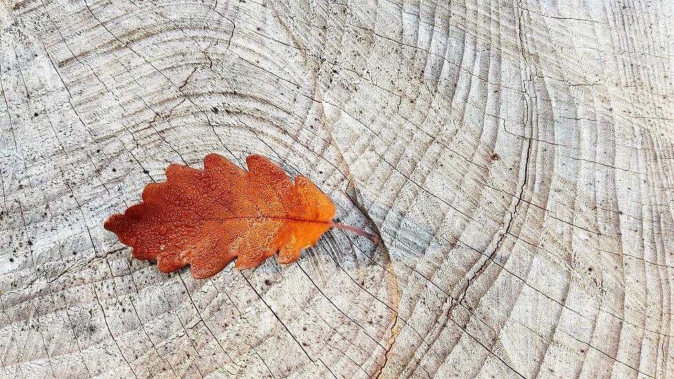 autumn-2815427_1920.jpg