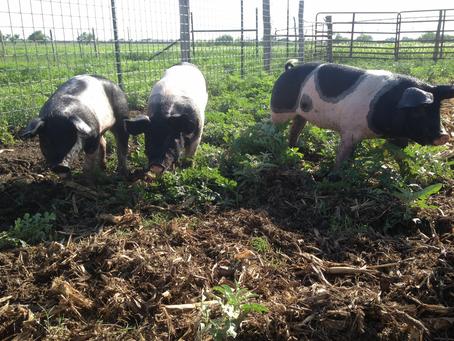 5 Health Benefits of Pasture-Raised Pork