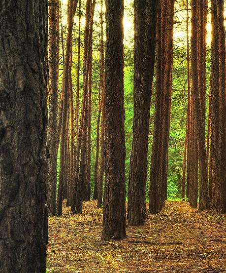 woods_edited_edited.jpg